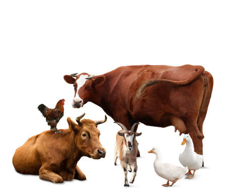 Group of different farm animals on white background