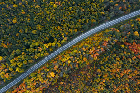 Aerial view of road going through beautiful autumn forest