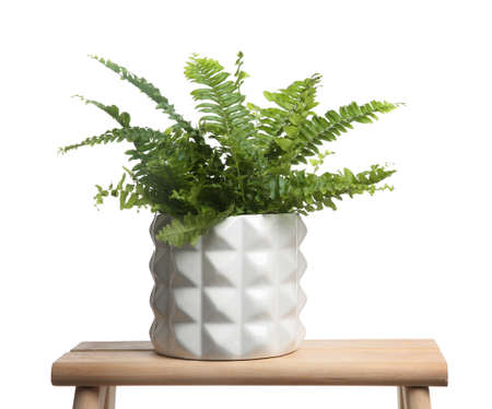 Beautiful fern in pot on wooden table against white background