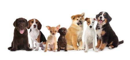 Group of adorable puppies on white background. Banner design