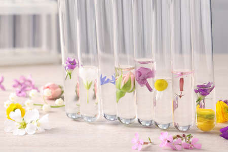 Test tubes with different flowers on white wooden table. Essential oil extraction Imagens