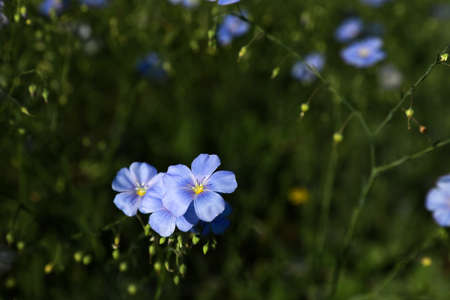 Beautiful blooming flax plants in meadow, space for text