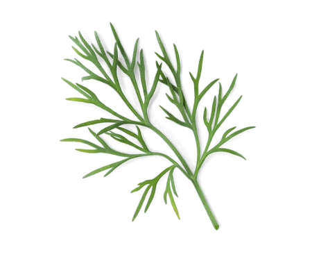 Sprig of fresh dill isolated on white, top view 版權商用圖片