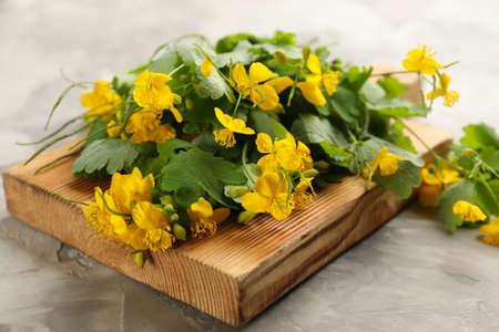 Celandine with beautiful yellow flowers on gray table, closeup 版權商用圖片