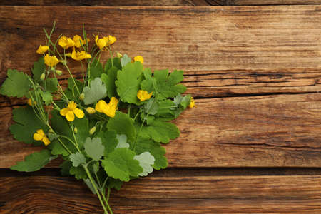 Celandine with yellow flowers and green leaves on wooden table, flat lay. Space for text