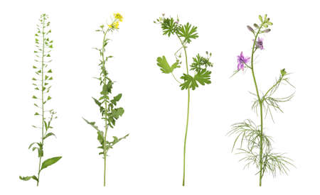 Collection of different beautiful wild plants on white background 版權商用圖片