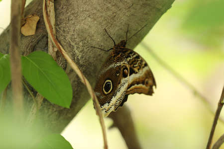 Beautiful exotic butterfly on tree branch outdoors