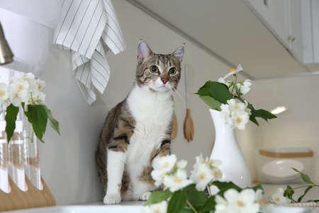 Cute cat near jasmine flowers on countertop in kitchen