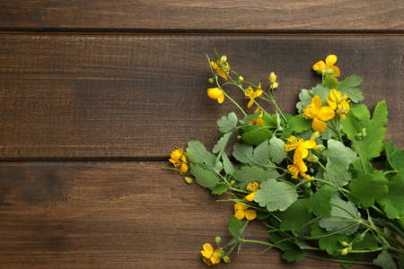 Celandine with beautiful yellow flowers on wooden table, flat lay. Space for text 版權商用圖片