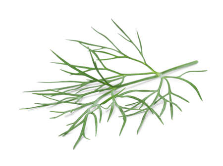 Sprig of fresh dill isolated on white 版權商用圖片