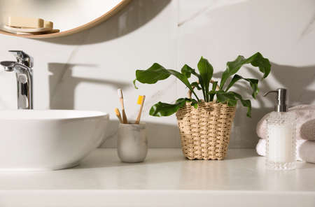 Beautiful green fern, towels and toiletries on countertop in bathroom