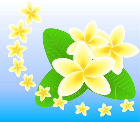 Frangipani Flowers Composition