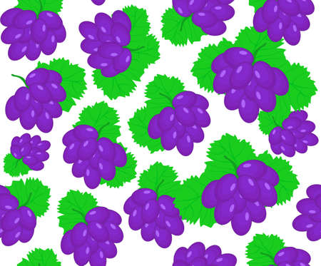 Beautiful vector seamless pattern with grape bunches on a white background Vector