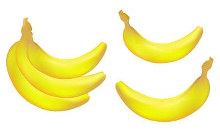 primate biology: Vector realistic bananas