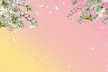 Branches of blossoming cherry with soft focus on gentle light pink sky 版權商用圖片