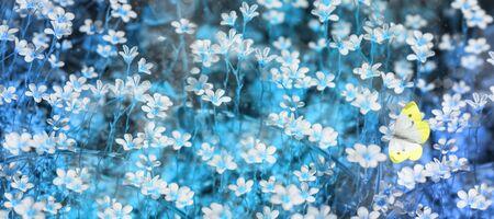Field of flowering white flowers. 版權商用圖片