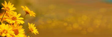 Beautiful plants with bright yellow flowers 版權商用圖片