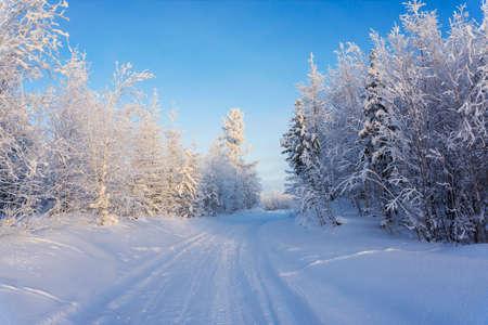Winter landscape with bright blue sky, Sunny winter day. Yamalo-Nenets Autonomous district