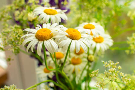 Meadow bouquet of daisies on the window on a bright sunny day. Close-up