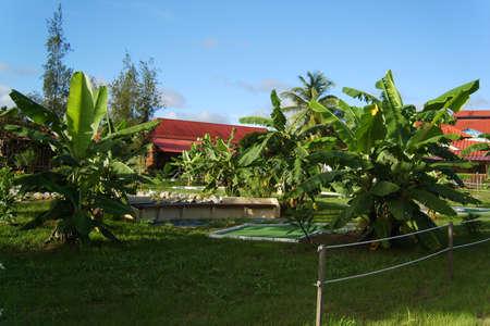 du: French Guiana, commune Sinnamary, Hotel Du Fleuve