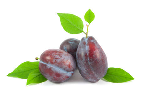 purple leaf plum: Plums with leaves isolated on white background