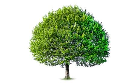 Foto van een boom, op een witte achtergrond Stockfoto