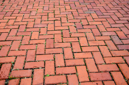 Closeup, abstract image of brick walkway pavers with green clover growing in the cracks photo