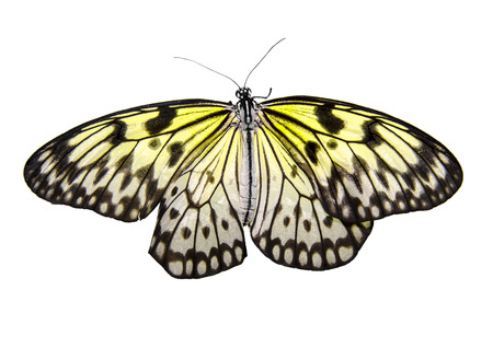 Butterfly isolated  photo