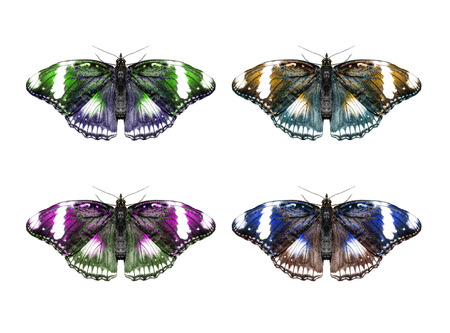 Butterfly isolated collage photo
