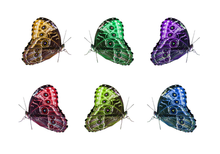 Butterfly isolated collage on a white background photo