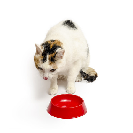 contented: Licked cat near bowls, isolated on white background
