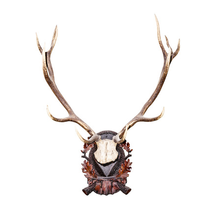 elk point: Antlers of a huge stag isolated on white