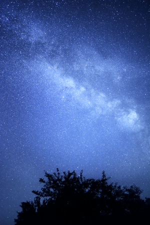 milky way galaxy: Milky Way galaxy. Starry sky and a silhouette of a tree. Stock Photo