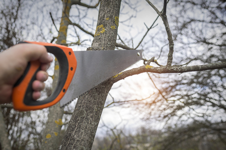 spring training: Man cuts tree branches sawing. Spring training garden plot vegetation. Stock Photo