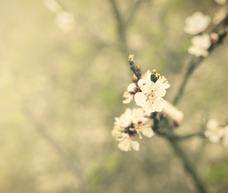 submersion: Blossoming spring tree. Image in vintage style.