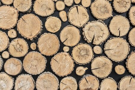 ecologically: Tree stumps background. Ecologically clean floor or wall decoration of the tree stumps.