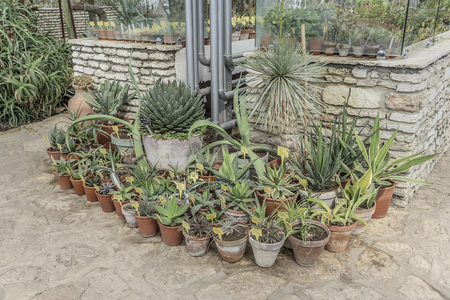 balchik: Cactuses in the botanical garden in Balchik, Bulgaria.