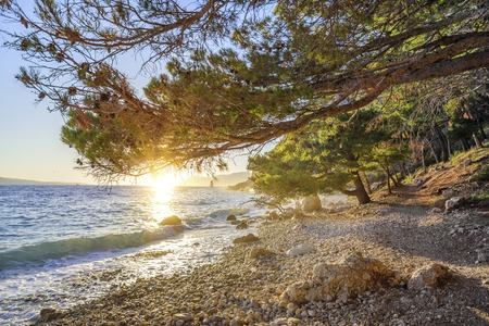 Beautiful pine trees and the shore of the blue sea in the evening. Croatia. Stock Photo