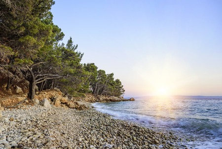 Beautiful pine trees and the shore of the blue sea in the evening. Croatia. Stock Photo - 84895186