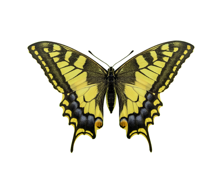 Yellow butterfly isolated on white background.