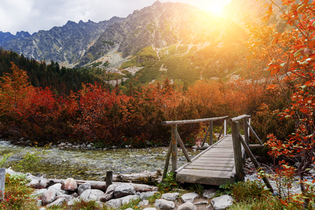 Wooden footbridge across stream in the mountain forest, High Tatras.