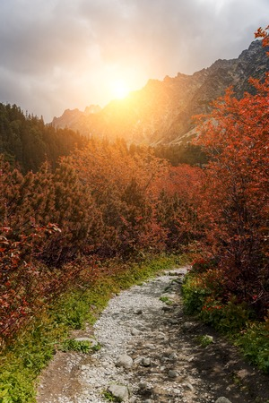 Forest autumn landscape in the mountains. High Tatras.