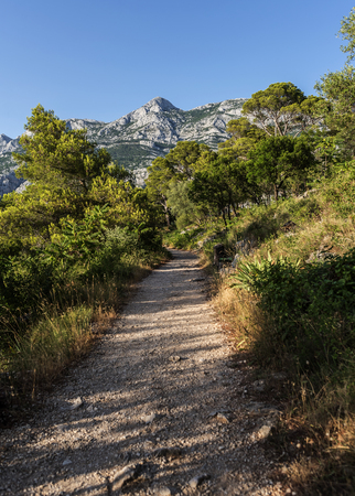 Alley in the summer pine park. Adriatic.