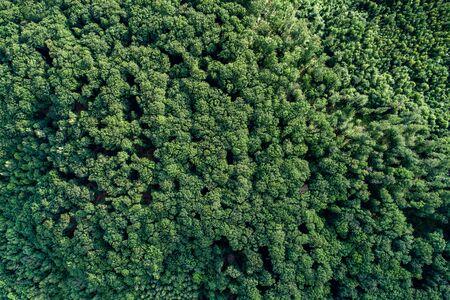 Aerial view forest. Zdjęcie Seryjne