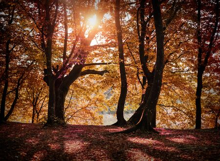 Autumn forest landscape.