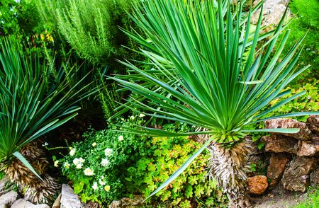 Ornamental plants in landscaping in the garden.