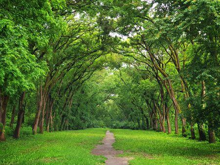 Ruelle pittoresque du parc aux couleurs saturées de l'été.