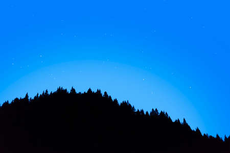 Night sky against the tops of spruce trees.