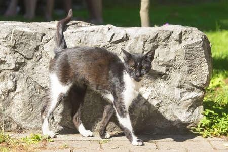 parapet: The stray cat near a stone fence on a sunny day.