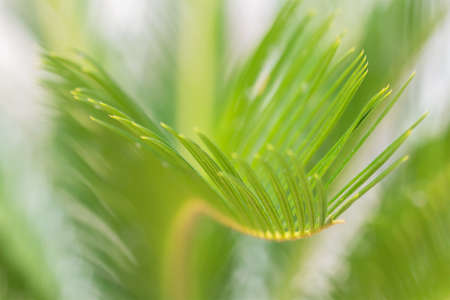 Close-up view of fresh green palm tree leaf.